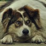 Onderzoek: Uw perceptie over overgewicht onder Belgische katten en honden!