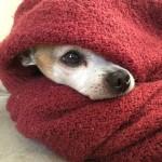 Is uw huisdier bang van lawaai tijdens de feestdagen?