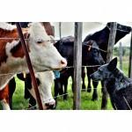 Enquête: De visie van de Vlaamse dierenartsen werkzaam in Vlaanderen op dierenwelzijn anno 2021