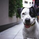Dienst Dierenwelzijn: campagne 'Verrijk je dier'