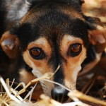 Veel hogere boetes en strengere celstraffen voor dierenbeulen